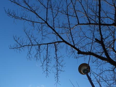 桜 2020年1月9日