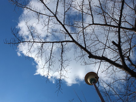 桜 2020年1月13日
