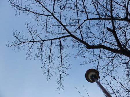 桜 2020年1月14日