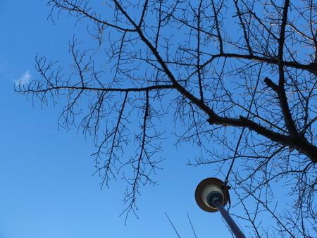 桜 2020年1月15日