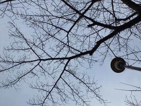 桜 2020年1月16日