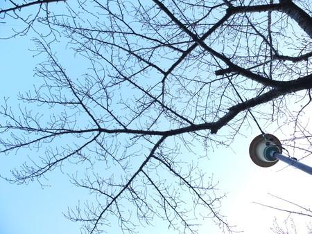 桜 2020年1月20日
