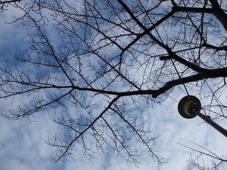 桜 2020年1月25日