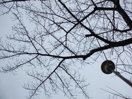 桜 2020年1月27日