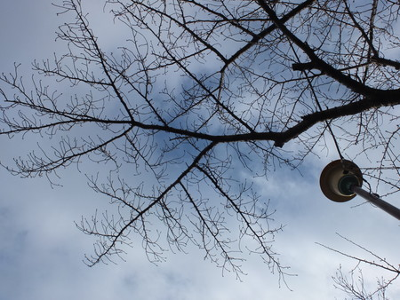 桜 2020年1月28日