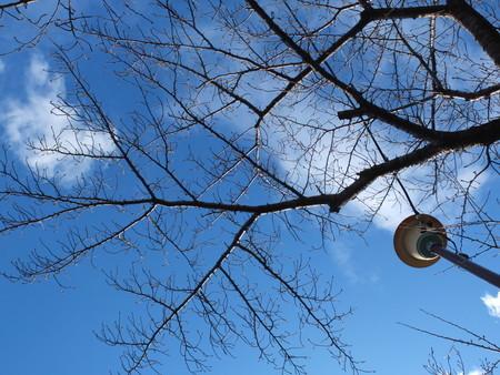 桜 2020年1月30日