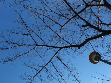 桜 2020年2月2日