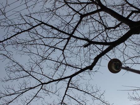 桜 2020年2月3日