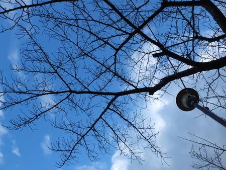 桜 2020年2月5日