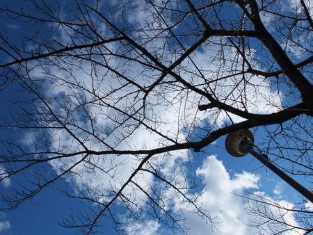 桜 2020年2月6日