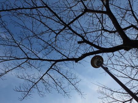桜 2020年2月7日