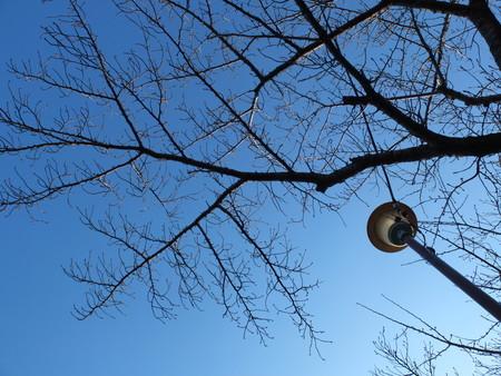 桜 2020年2月8日