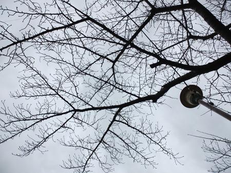 桜 2020年2月14日