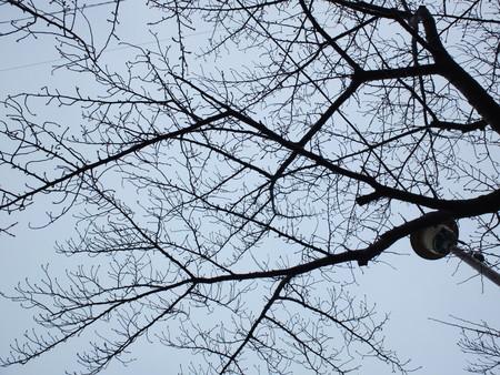 桜 2020年2月16日