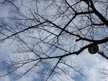 桜 2020年2月18日