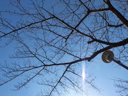 桜 2020年2月21日