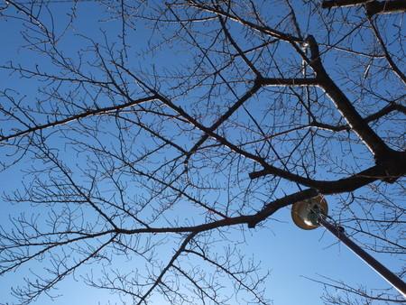 桜 2020年2月24日