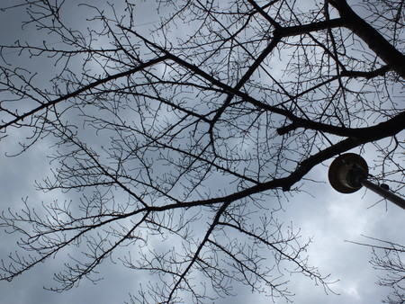 桜 2020年2月25日