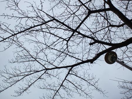 桜 2020年2月29日