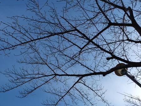 桜 2020年3月3日