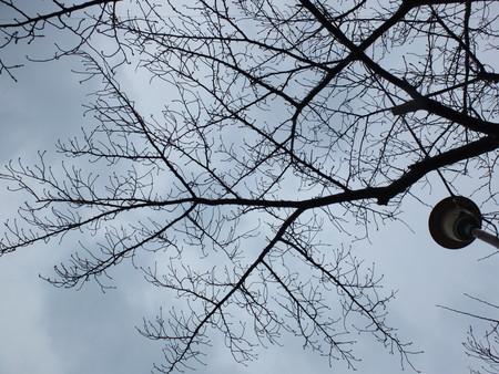 桜 2020年3月4日