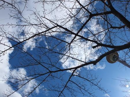 桜 2020年3月5日
