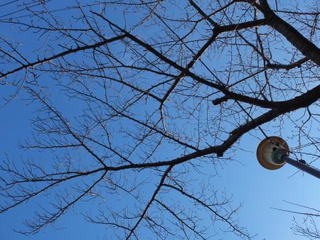 桜 2020年3月7日