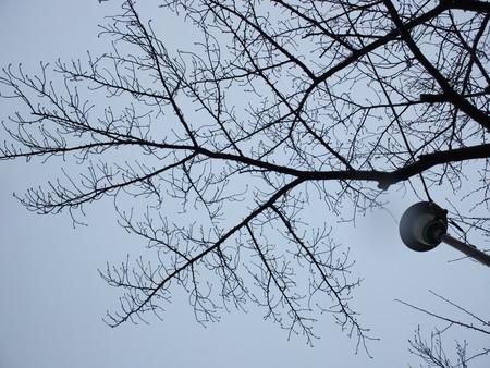 桜 2020年3月8日