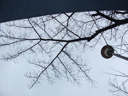 桜 2020年3月10日