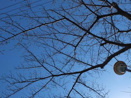 桜 2020年3月12日
