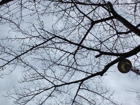 桜 2020年3月13日