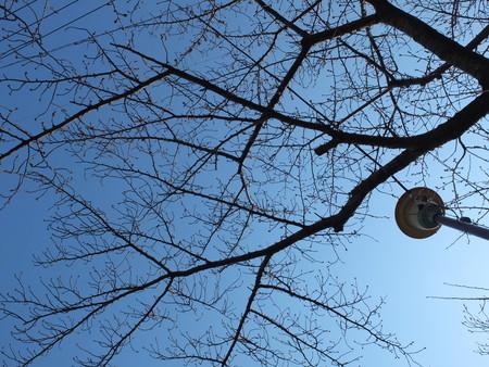桜 2020年3月17日