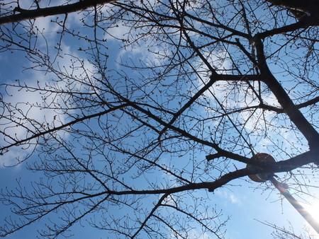 桜 2020年3月19日