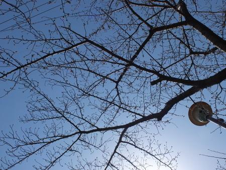 桜 2020年3月21日