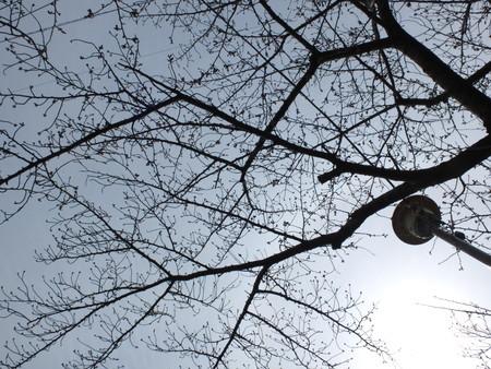 桜 2020年3月22日