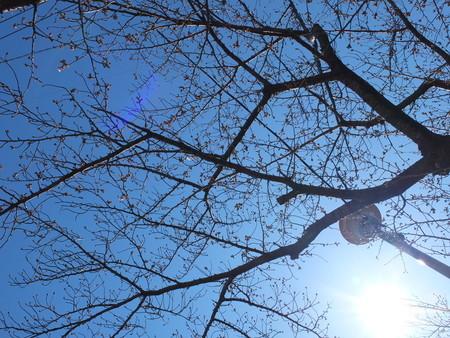 桜 2020年3月23日