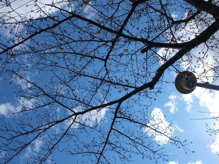 桜 2020年3月24日