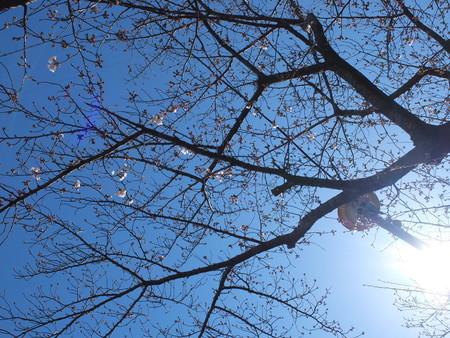 桜 2020年3月25日
