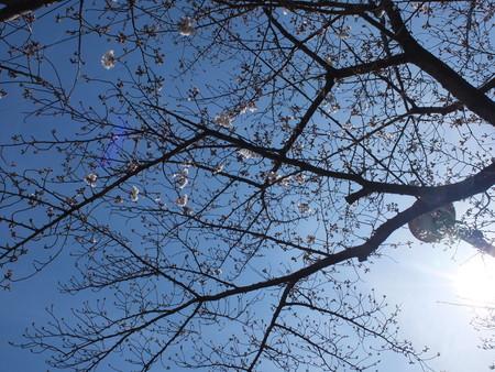 桜 2020年3月26日