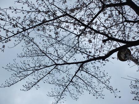 桜 2020年3月27日