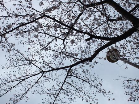 桜 2020年3月28日