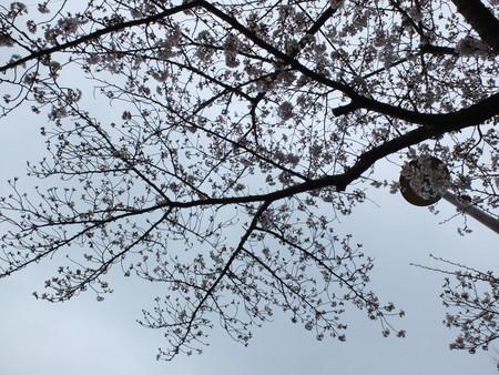 桜 2020年3月30日