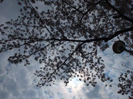 桜 2020年4月4日
