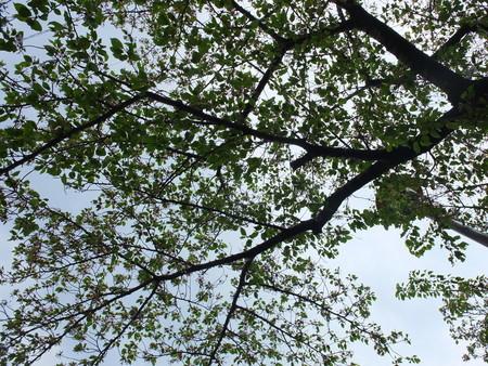 桜 2020年4月18日