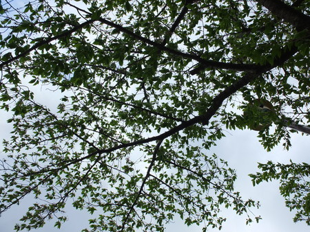 桜 2020年4月22日