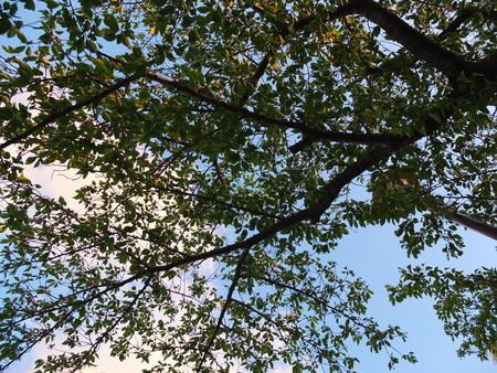 桜 2020年4月23日