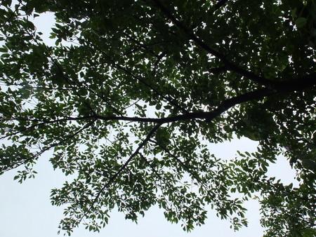桜 2020年5月31日