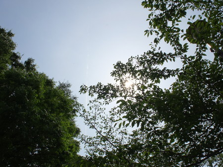 地球の平熱は何℃?