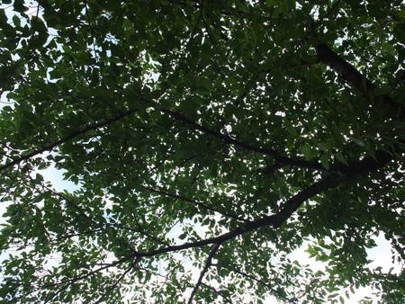 桜 2020年7月16日