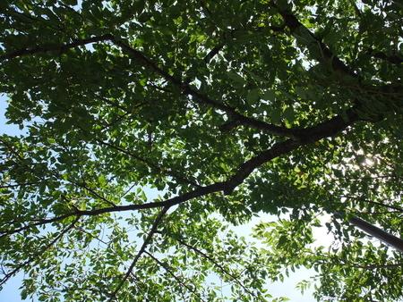 桜 2020年8月1日 梅雨明け